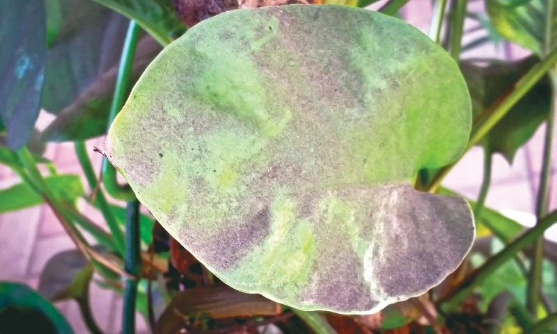 Coal dust covers a plant leaf.