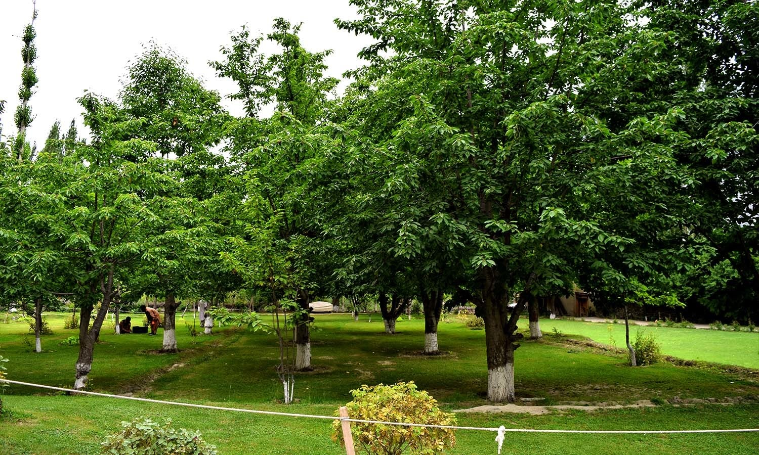 The orchards of Shigar Palace.
