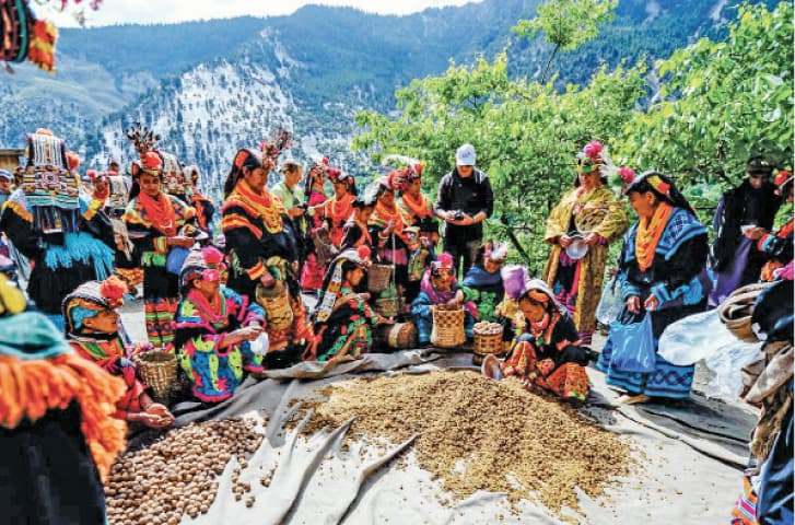 Women pack dry fruit for distribution during Chilim Jusht festival in Kalash valley of Chitral on Wednesday. — Dawn