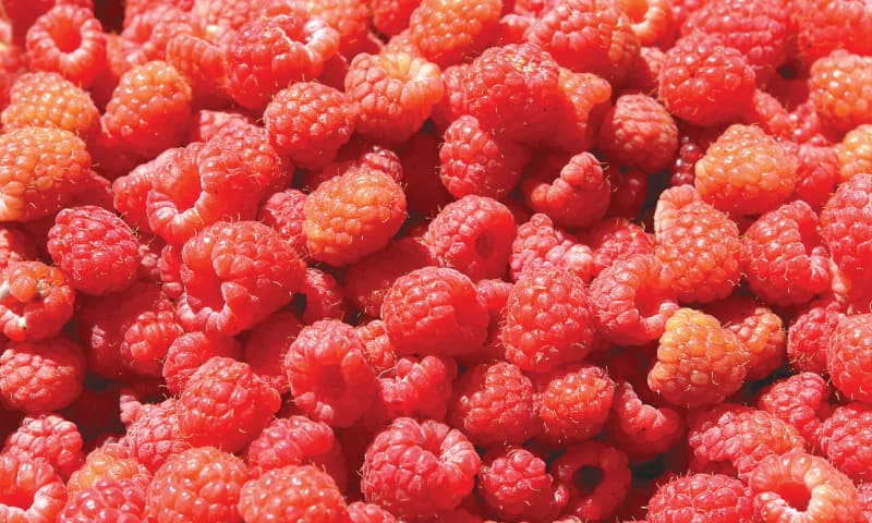 Raspberries   Photos by the writer
