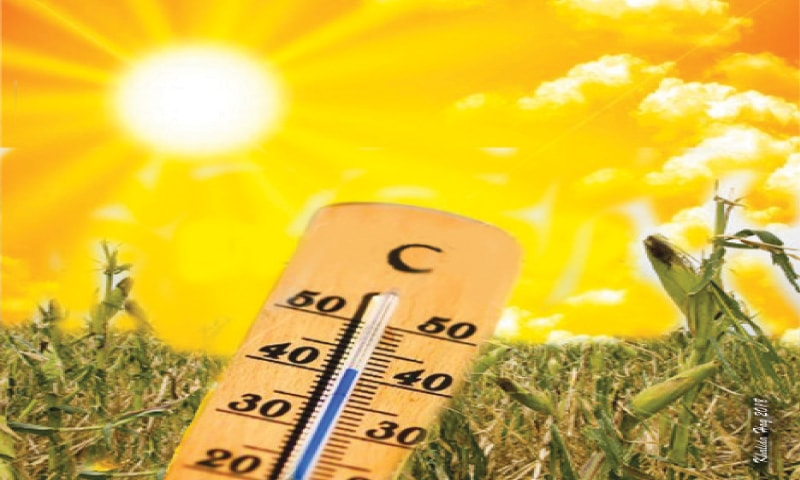 How heatwaves affect agriculture