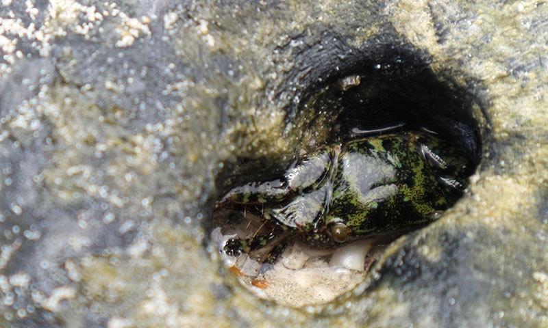 سمندری مخلوق کی ہلاکت کا سب سے بڑا سبب پلاسٹک ہے—فوٹو: شٹر اسٹاک