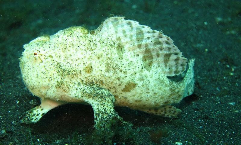 سمندری مخلوق پلاسٹک کو خوراک سمجھ کر کھاجاتی ہے—فوٹو: شٹر اسٹاک