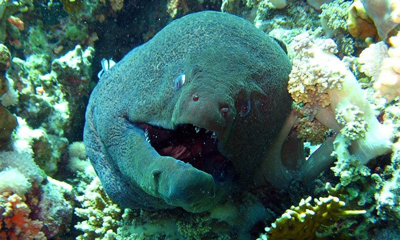 پلاسٹک سے متاثر سمندری مخلوق دوسری مخلوق کو بھی متاثر کر رہی ہے—فوٹو: شٹر اسٹاک