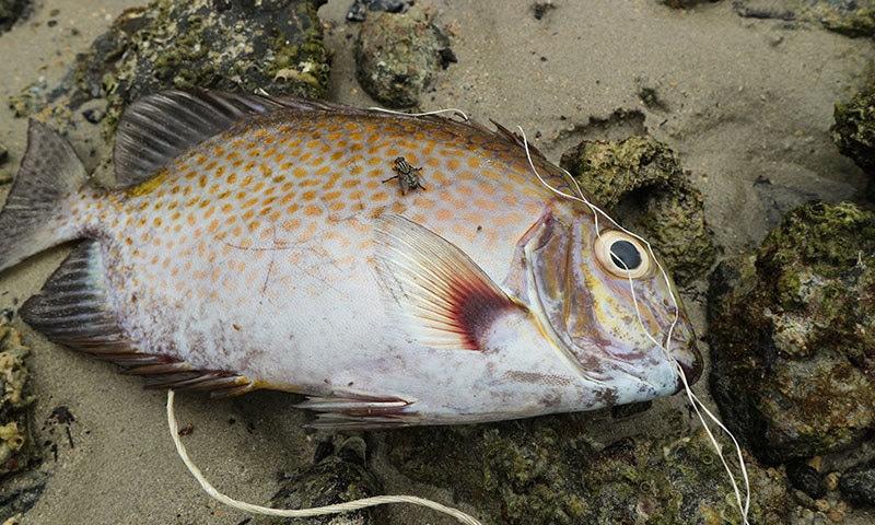 مچھلیاں پلاسٹک اور اپنی خوراک میں فرق سمجھنے کے بھی اہل نہیں—فوٹو: شٹر اسٹاک