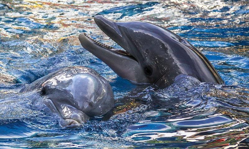 پلاسٹک سے سب سے زیادہ سمندری مخلوق متاثر ہوئی ہے—فوٹو: شٹر اسٹاک