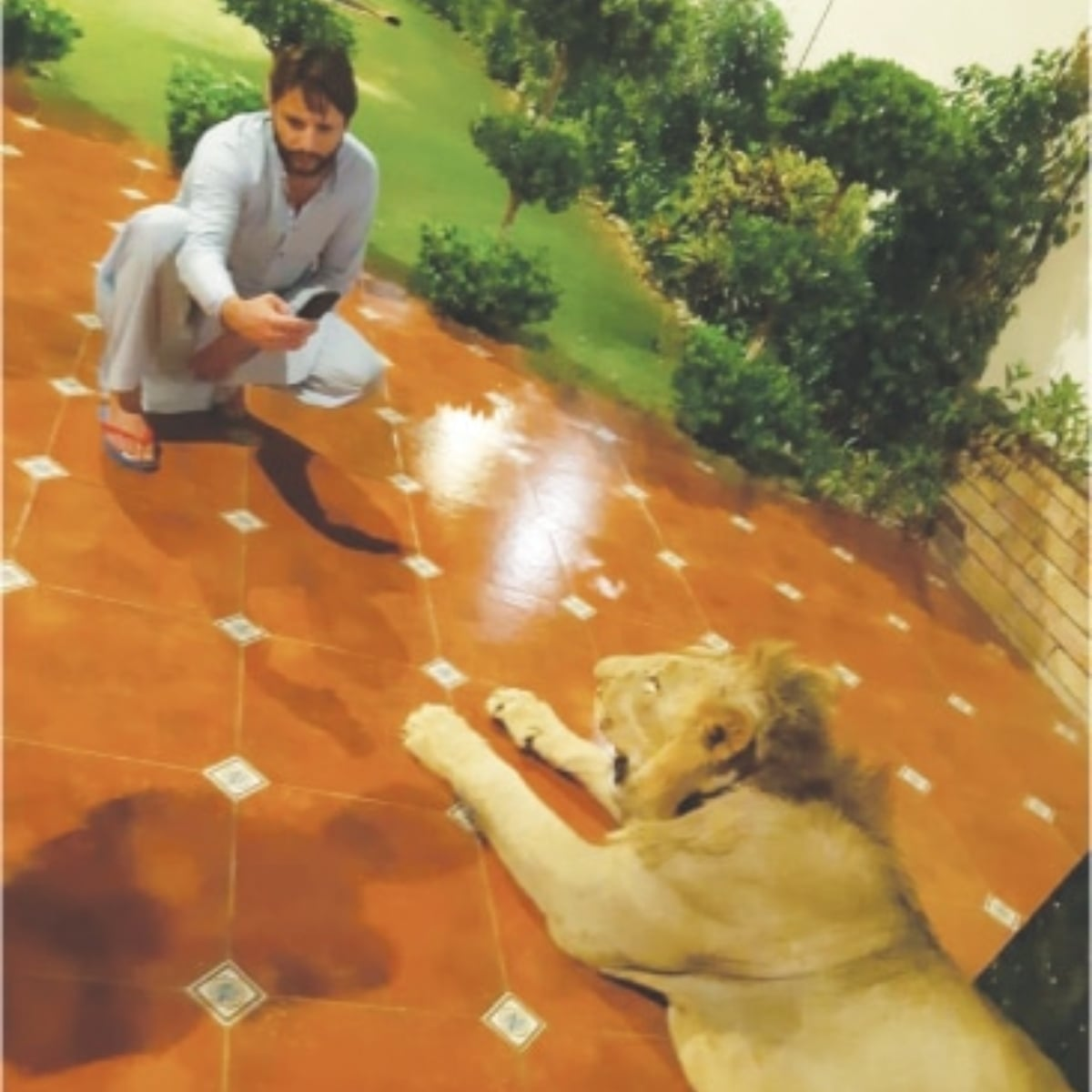 Shahid Afridi takes a photo of his fan's lion