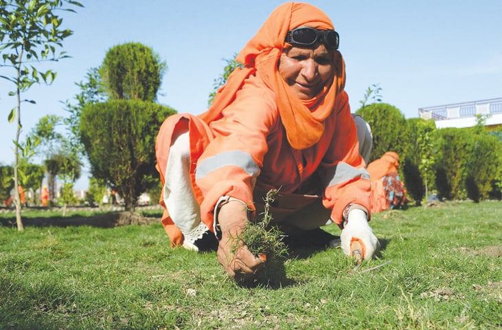 A FEMALE Afghan municipality employee, supported by United Nations agency UN-Habitat, removes weeds at a public garden in Jalalabad.—AFP