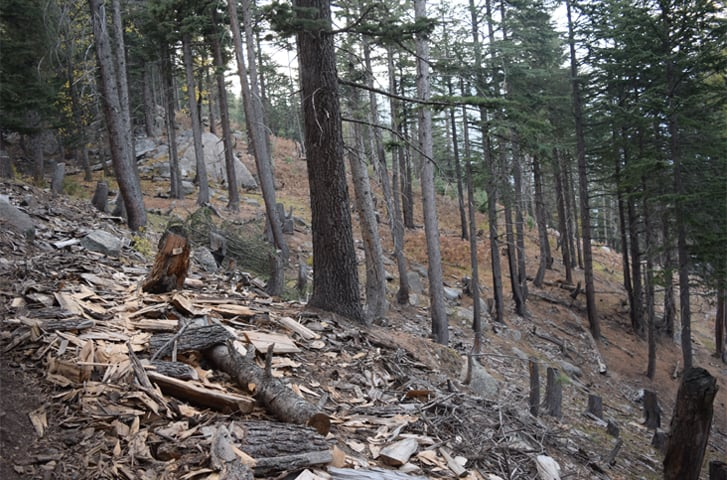 Apart from firewood needs, felling of trees has risen due to the timber mafia -Photo by the writer