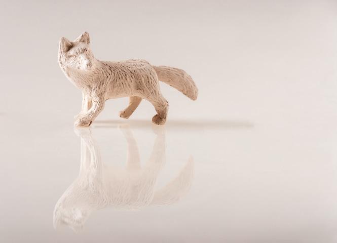 Fox (Wonderland Series), Naima Dadabhoy
