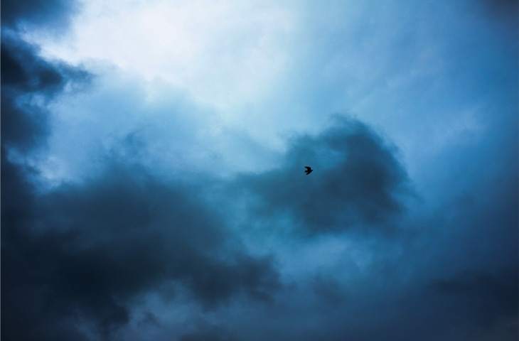 A bird soars in an overcast sky in Lahore | Nad-e-Ali
