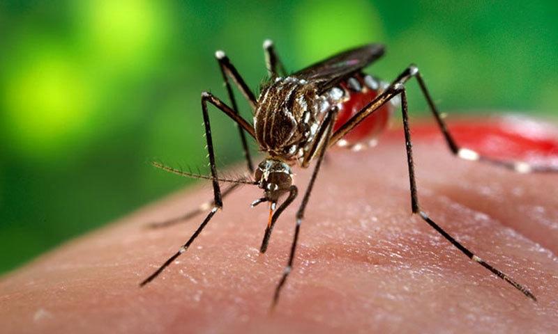 خشک سالی سے بھی وبائی امراض پھوٹتے ہیں—فوٹو: برٹینیکا ڈاٹ کام