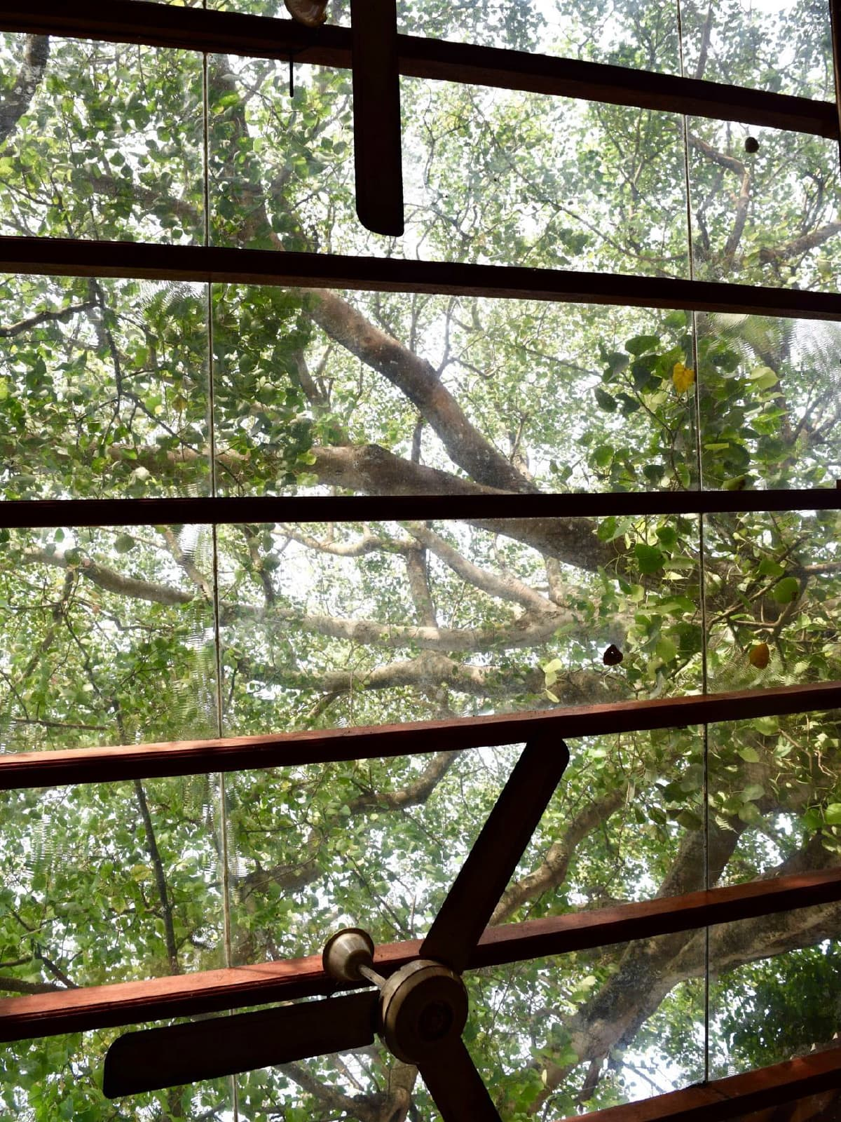 A tree allowed to grow through the roof in Colombo