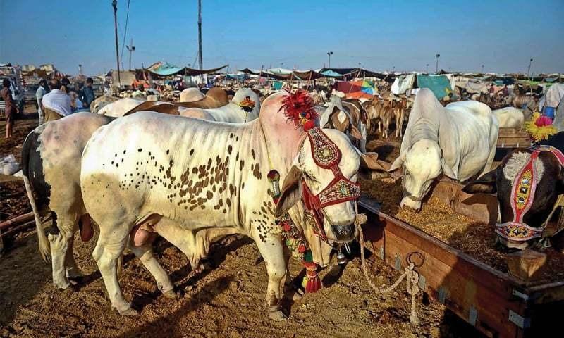 پاکستان ٹینری ایسوسی ایشن کا اندازہ ہے کہ اس سال عید الاضحٰی پر تقریباً 30 لاکھ بڑے اور اتنے ہی چھوٹے جانوروں کی قربانی کی جائے گی