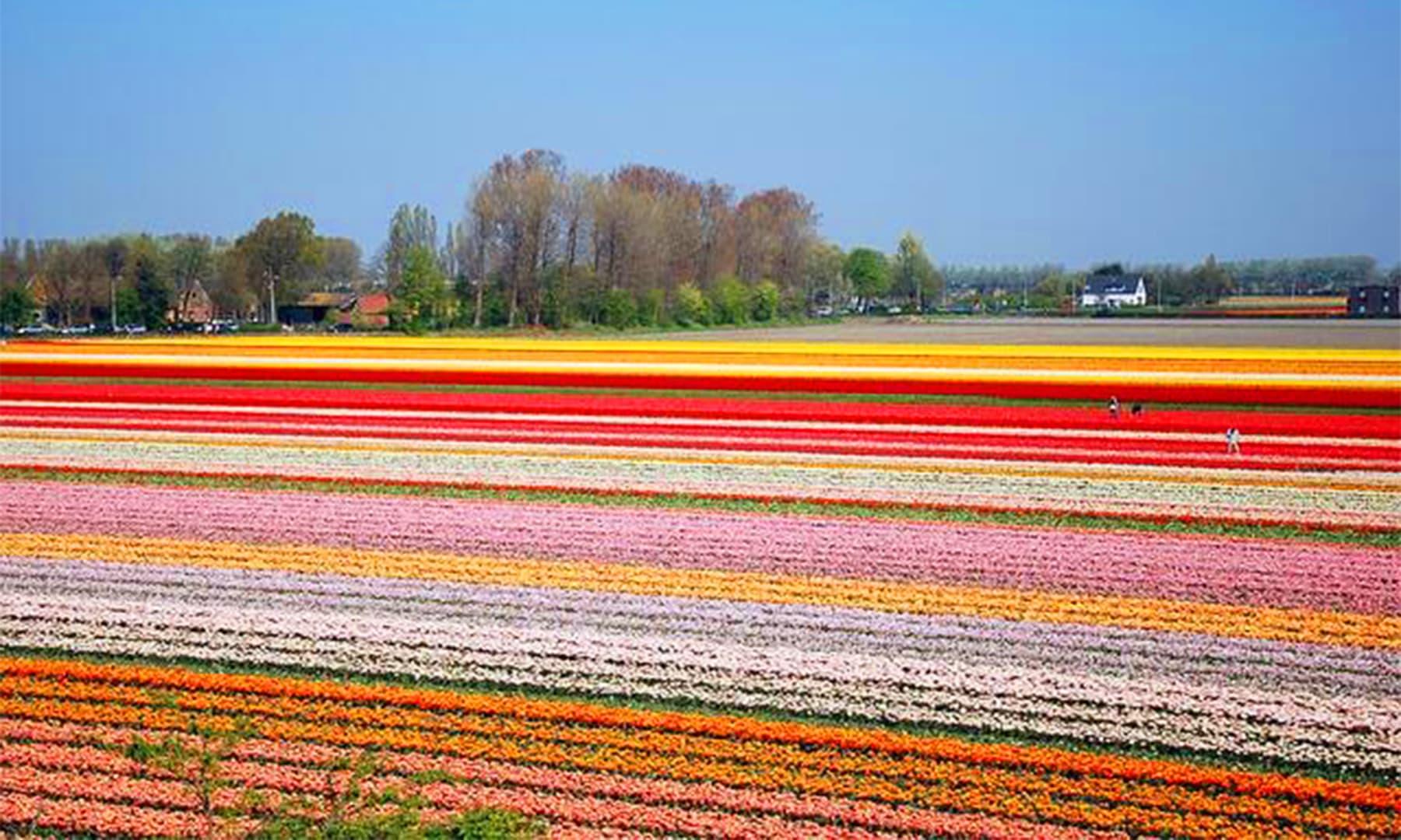 قوسِ قزاح کی طرح ست رنگی کھیتوں کے بیچوں بیچ سیدھے اور ہموار راستے