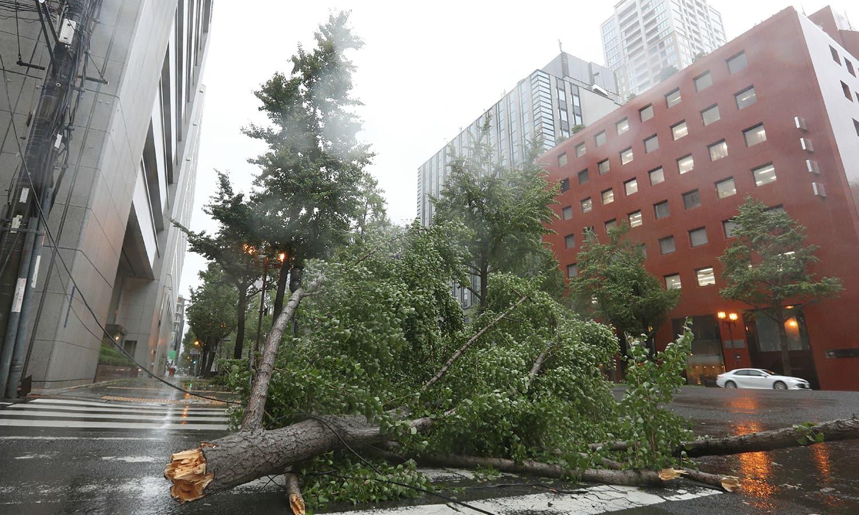 طوفان کی وجہ سے کئی مقامات پر درخت اکھڑ گئے اور عمارتوں کی چھتیں بھی اڑگئیں—فوٹو:اے ایف پی