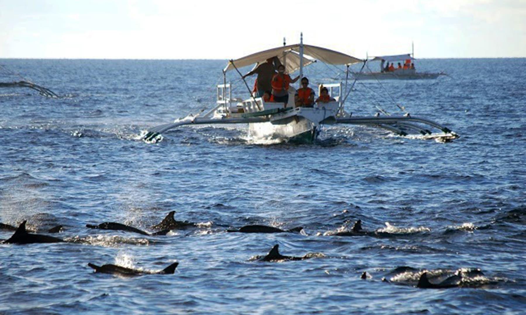 فیری سے ڈولفن کے گروپ کا نظارہ—تصویر عظمت اکبر
