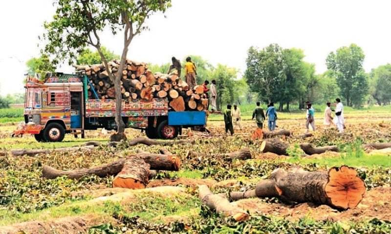 زمین کو دیگر ضرورتوں کو استعمال کرنے کے لیے گھنا جنگل خالی کردیا گیا