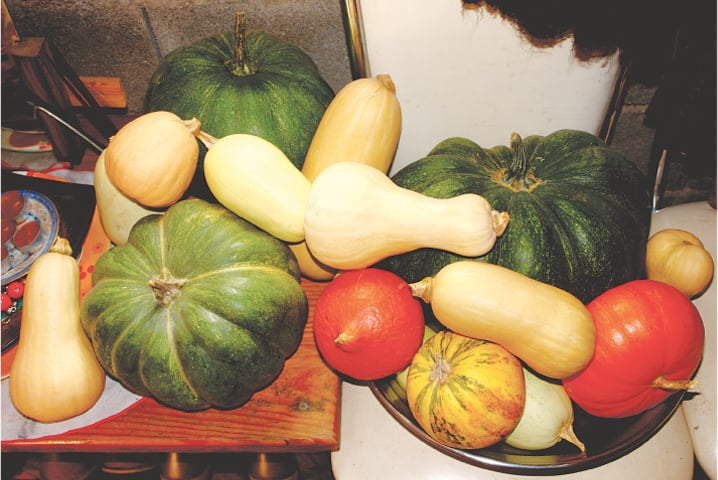 Pumpkins & squash | Photos by the writer