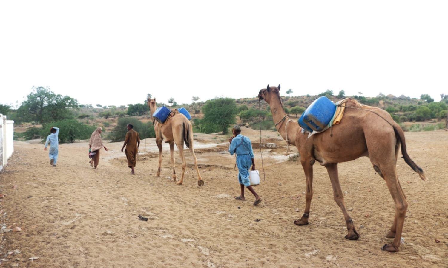 In pictures: Ravaged by drought, Tharis forced to turn to greener pastures