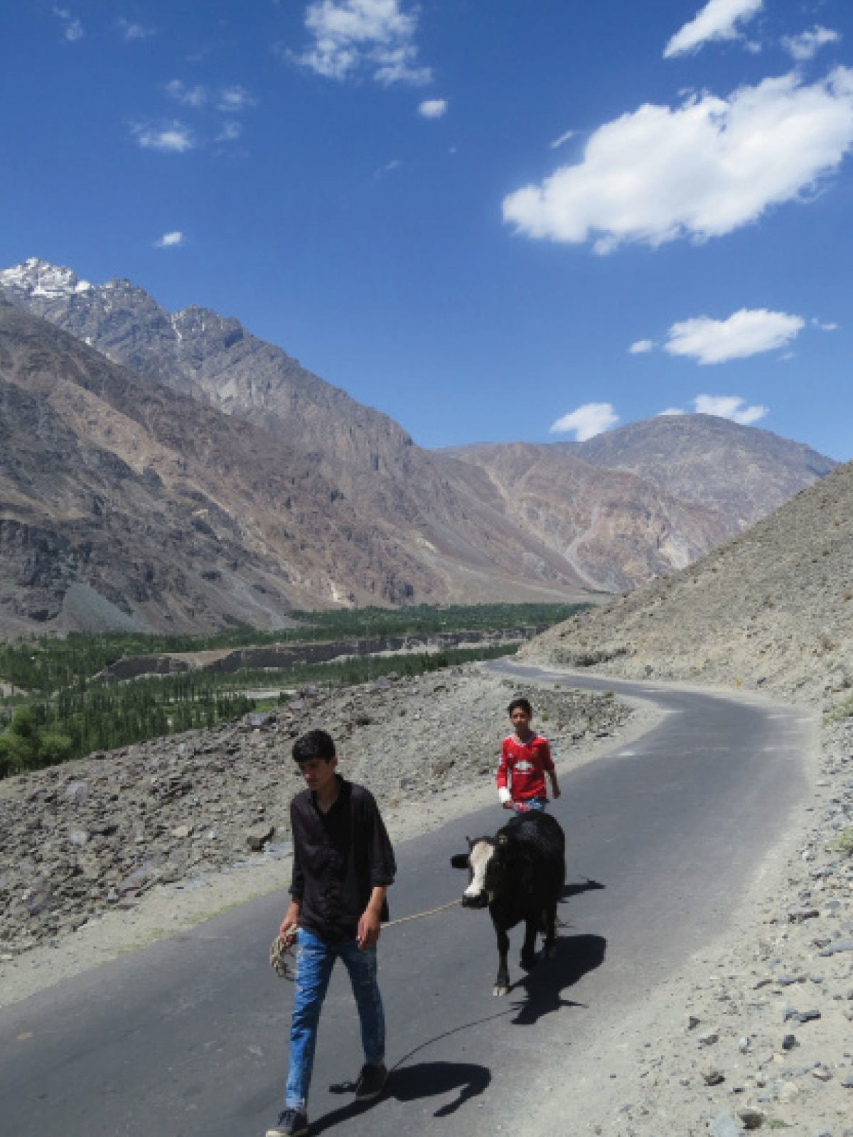 Boys pull along a cow on the road to Birgil village in Punyal | Aurangzaib Khan