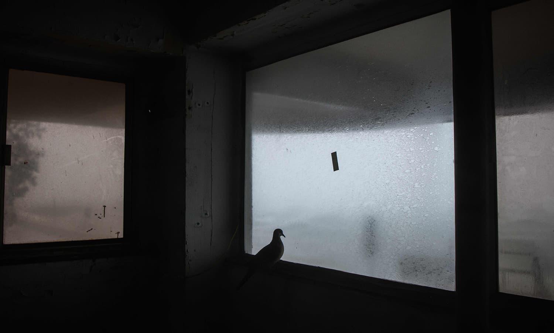 ہانگ کانگ میں طوفان سے بچنے کے لیے ایک کبوتر خالی عمارت میں پناہ لیے ہوئے — فوٹو : اے پی