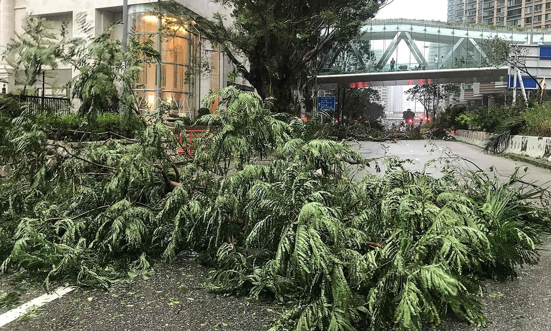 طوفان کے با عث تیز ہواؤں سے درختوں کو بھی نقصان پہنچا —فوٹو : اے ایف پی