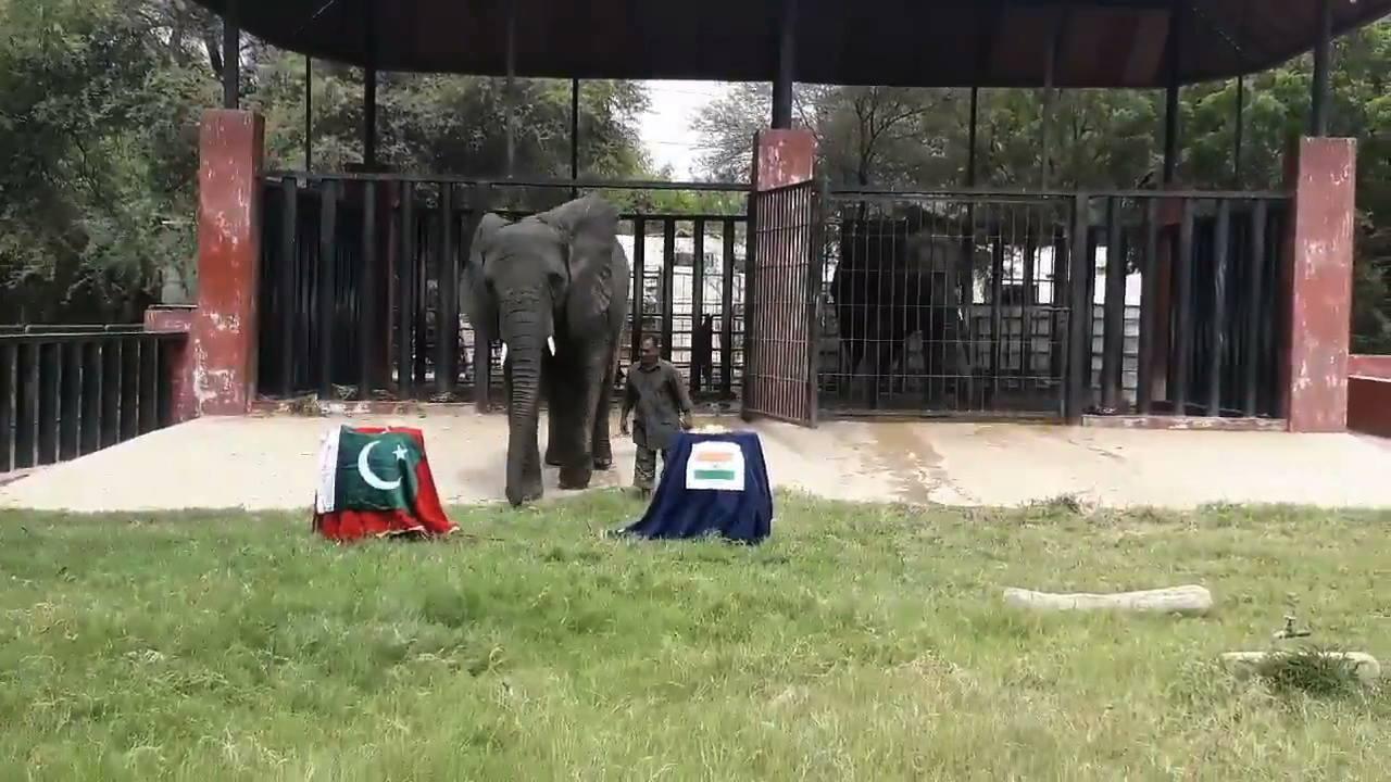 Safari Park elephant pictured before it picks a winner