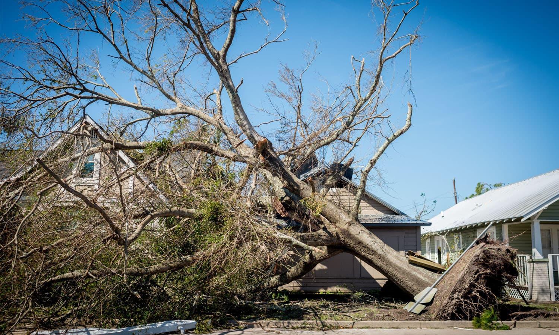 درخت گرنے کے نتیجے میں 2 افراد ہلاک ہوگئے— فوٹو: اے ایف پی