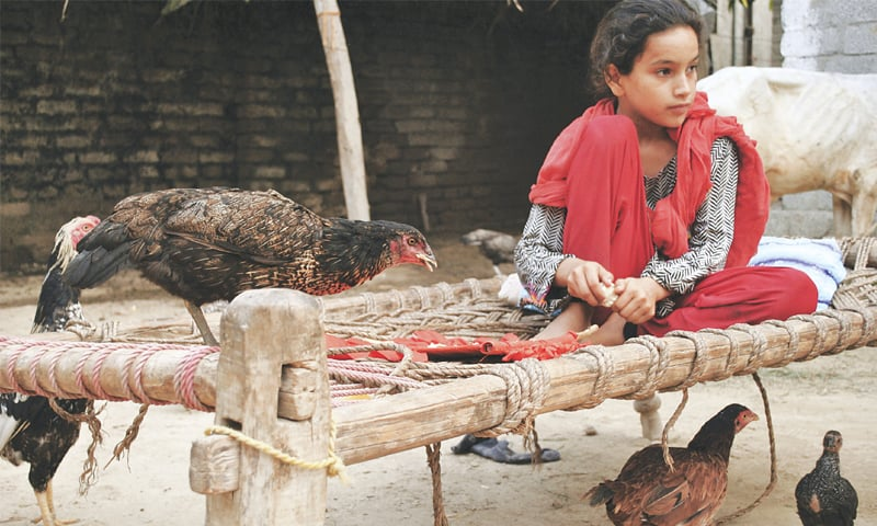 In this file photo, Ansa Khan is feeding her hens at her home in Mardan.—AP