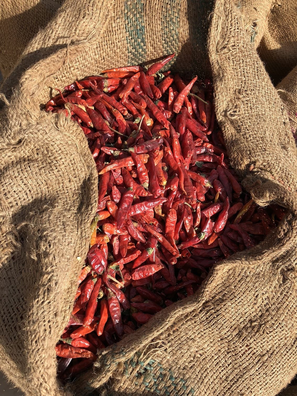 Chilli production has plummeted because of a lack of water for irrigation.