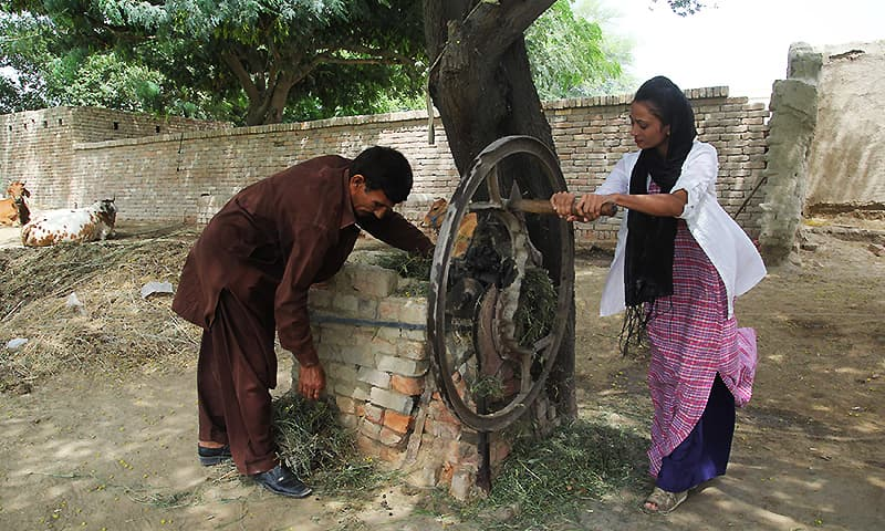 Uzma helps her father prepare food for cattle at their home in Duniyapur, Multan. — AFP