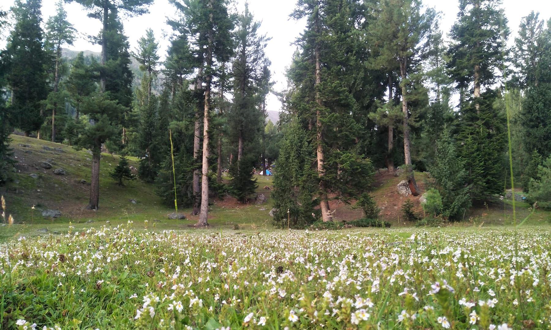 راما میڈوز کے پھولوں کی مہک دور دور تک محسوس ہوتی ہے—تصویر عظمت اکبر