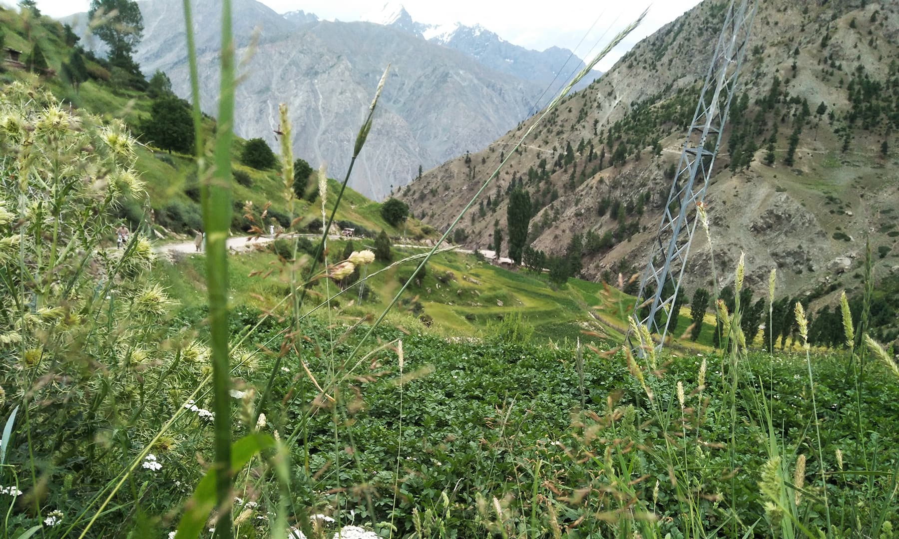 راما سرسبز لہلہاتے کھیتوں اور پھولوں پر مشتمل ایک وادی کا نام ہے—تصویر عظمت اکبر