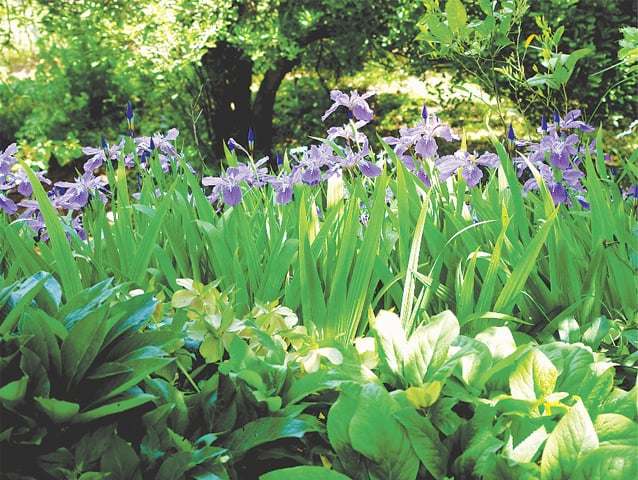 Maintaining correct soil moisture is essential for healthy plants