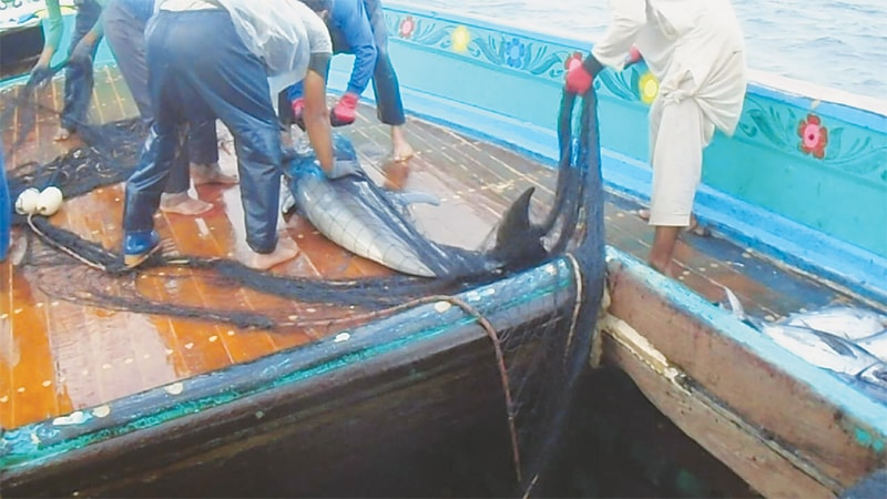 Entangled dolphins released back into sea