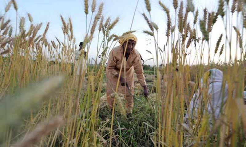 'Barely five per cent of Sindh's agriculture sector has been modernised and mechanised,' claims Nabi Bux Sathio. — File