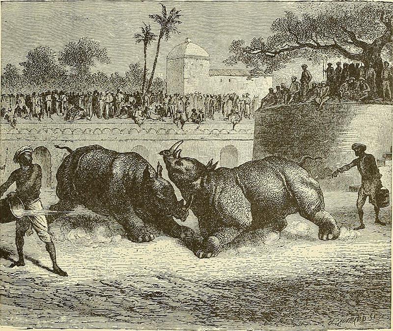 ہندوستانی ریاست بڑودا میں گینڈوں کی لڑائی کی ایک پینٹنگ۔ کتاب سائیکلوپیڈیا آف یونیورسل ہسٹری، صفحہ 299