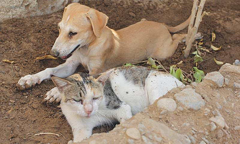 Citizens' portal receives complaints against stray dogs
