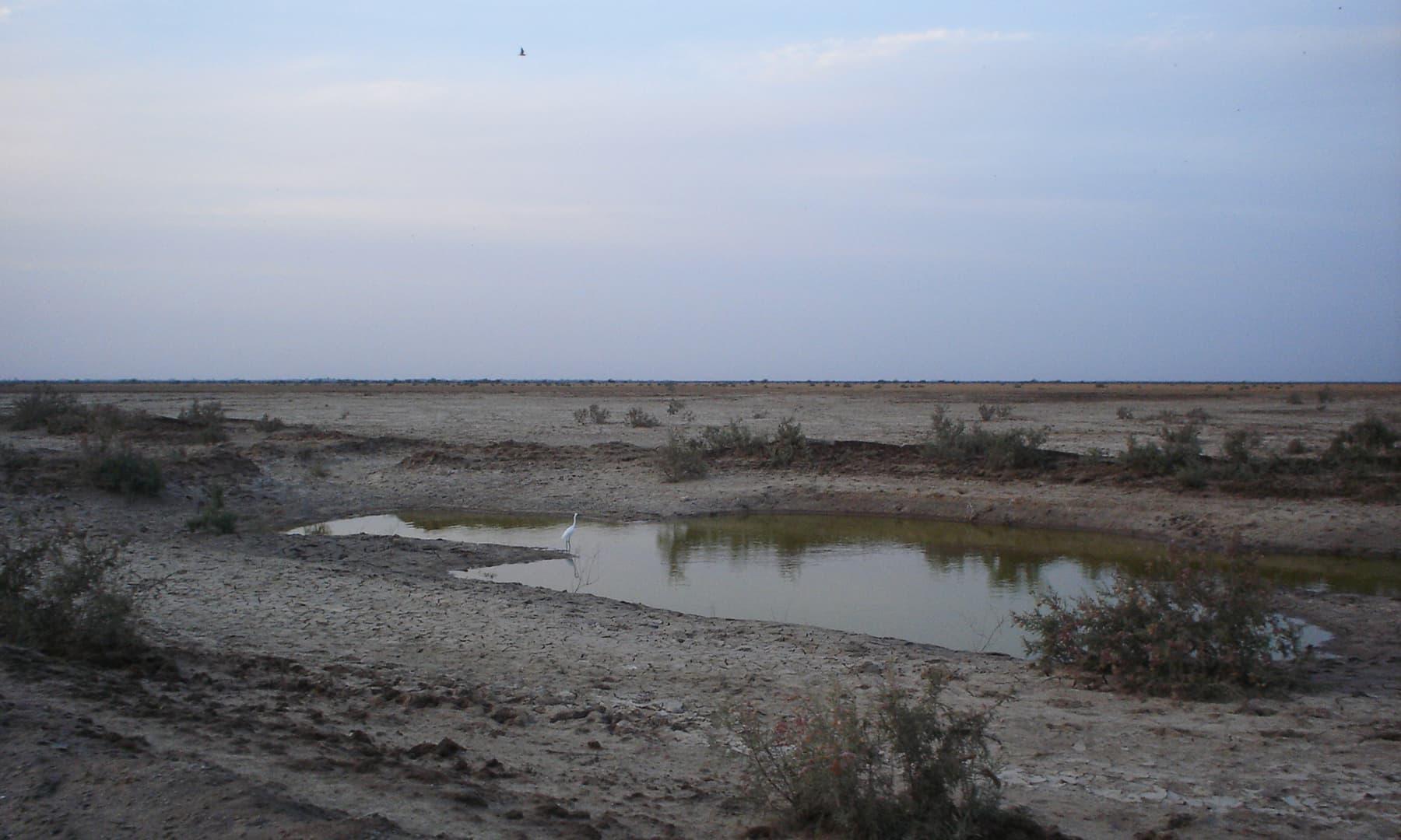 نریڑی جھیل کی موجودہ حالت—تصویر ابوبکر شیخ