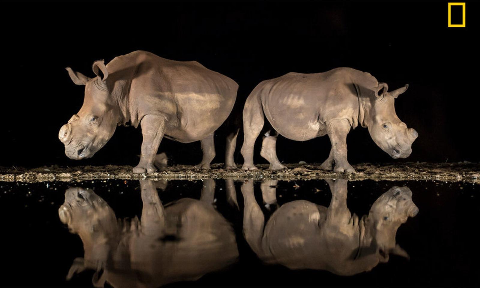فوٹو بشکریہ الیسن لینگورڈ/ نیشنل جیوگرافک