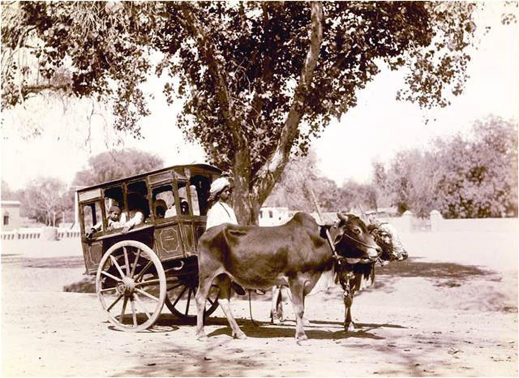 1890ء میں شکارپور میں چلنے والی بیل گاڑی