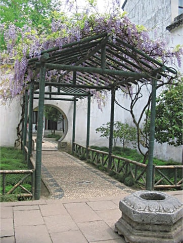 A Wisteria clad passageway leads the eye to a circular opening