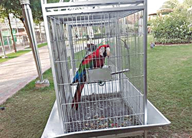 A macaw is kept in a small cage in The Eye View Park Zoo in Rawalpindi