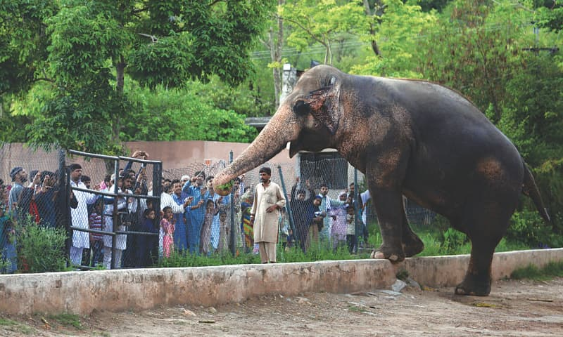 Visitors at Marghzar Zoo in Islamabad take pictures of Kawan the elephant | Mohammad Asim/White Star