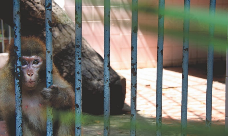 Karachi Zoo | Malika Abbas / White Star