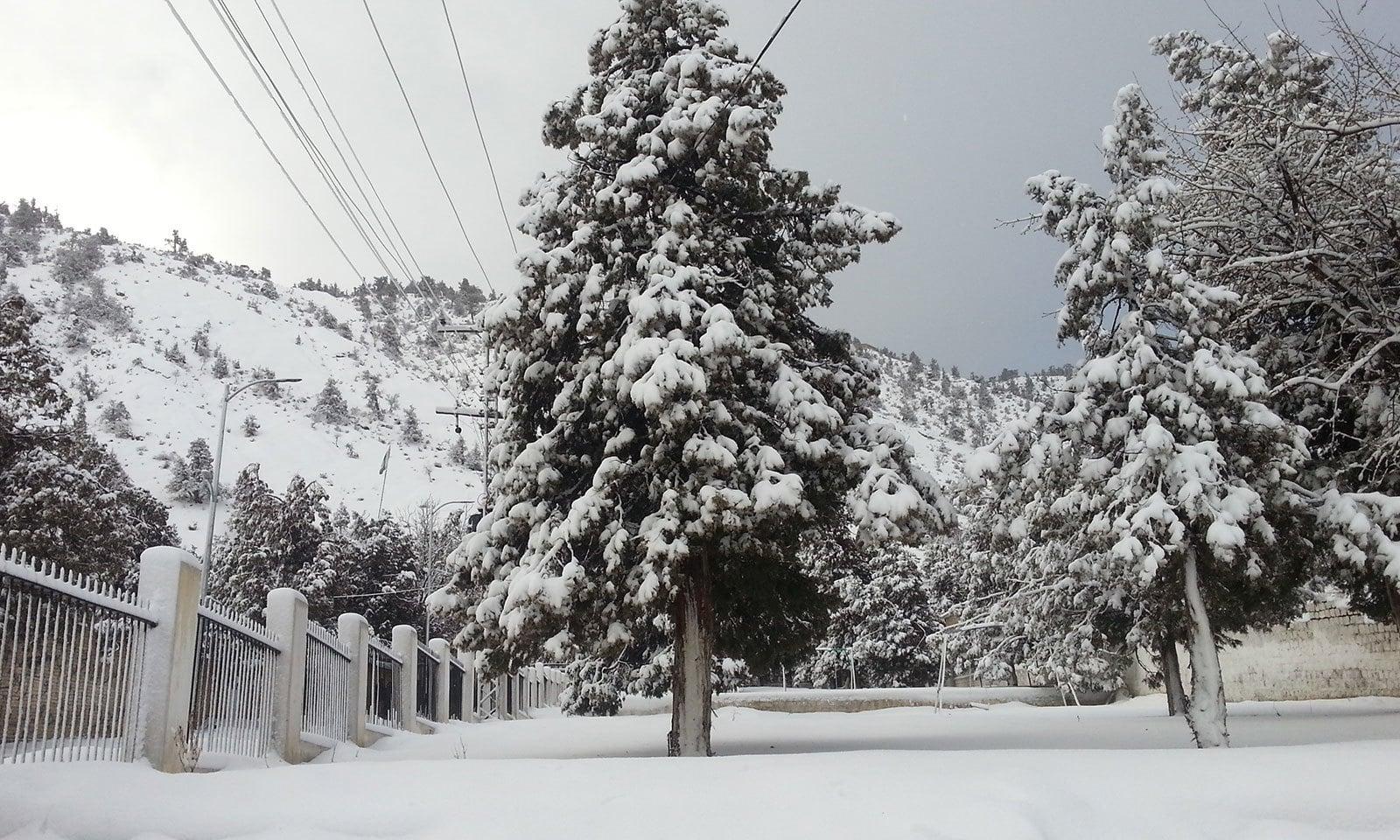برفباری کے بعد زیارت کا خوبصورت منظر — فوٹو بشکریہ وکی میڈیا کامنز