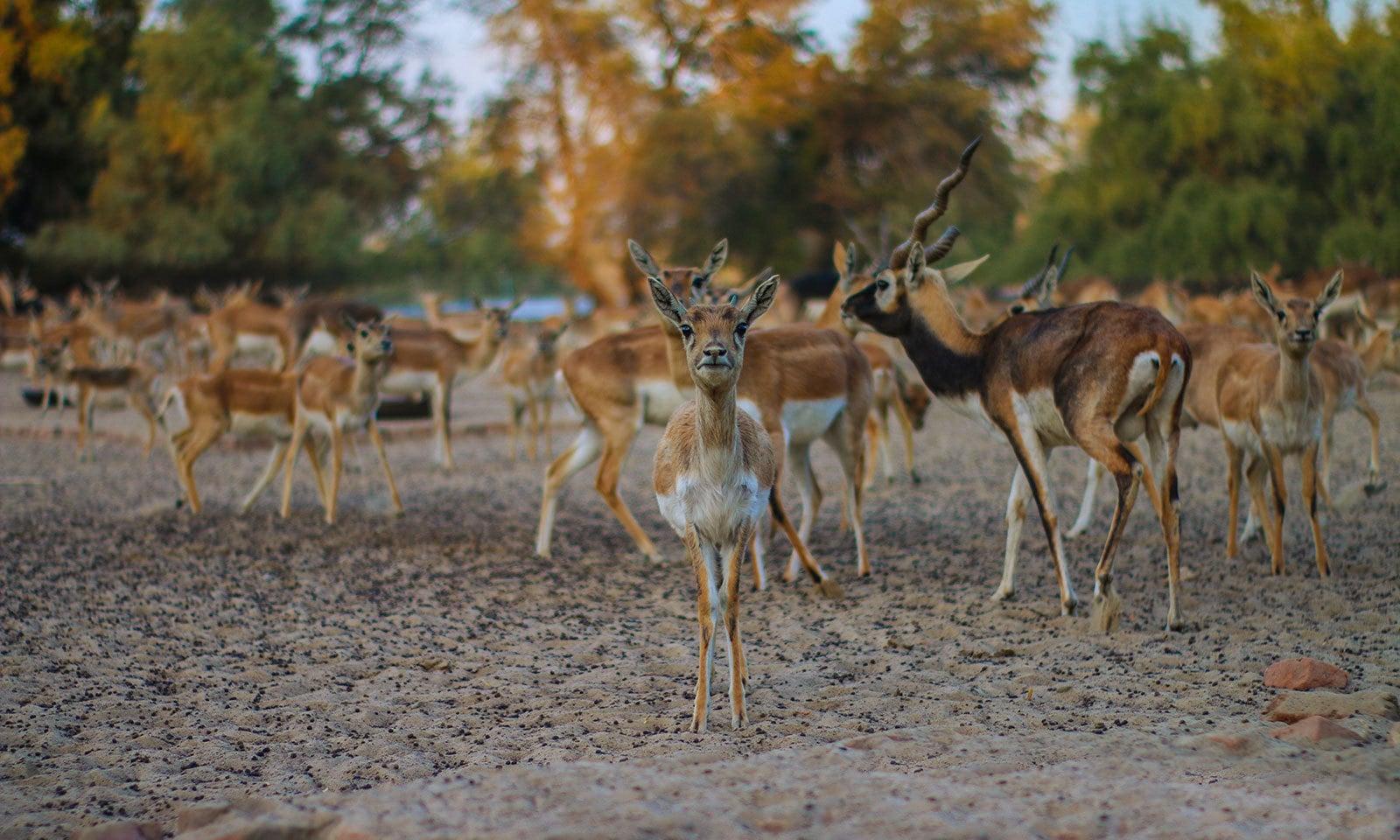 لال سوہانرا نیشنل پارک — شٹر اسٹاک فوٹو