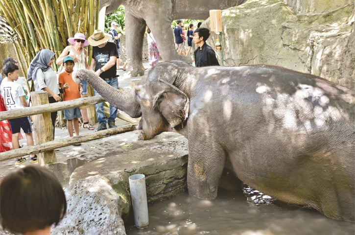 Elephants surely love being fed