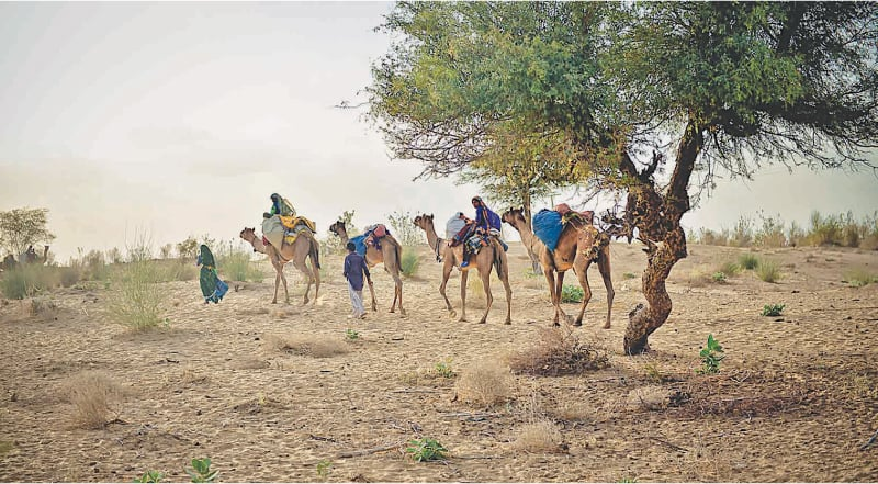 Families in Tharpakar migrate to various villages across Sindh due to drought | Fahim Siddiqui/White Star